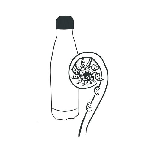 Bottle & Fern